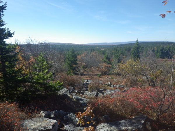 Dolly Sods Wilderness area